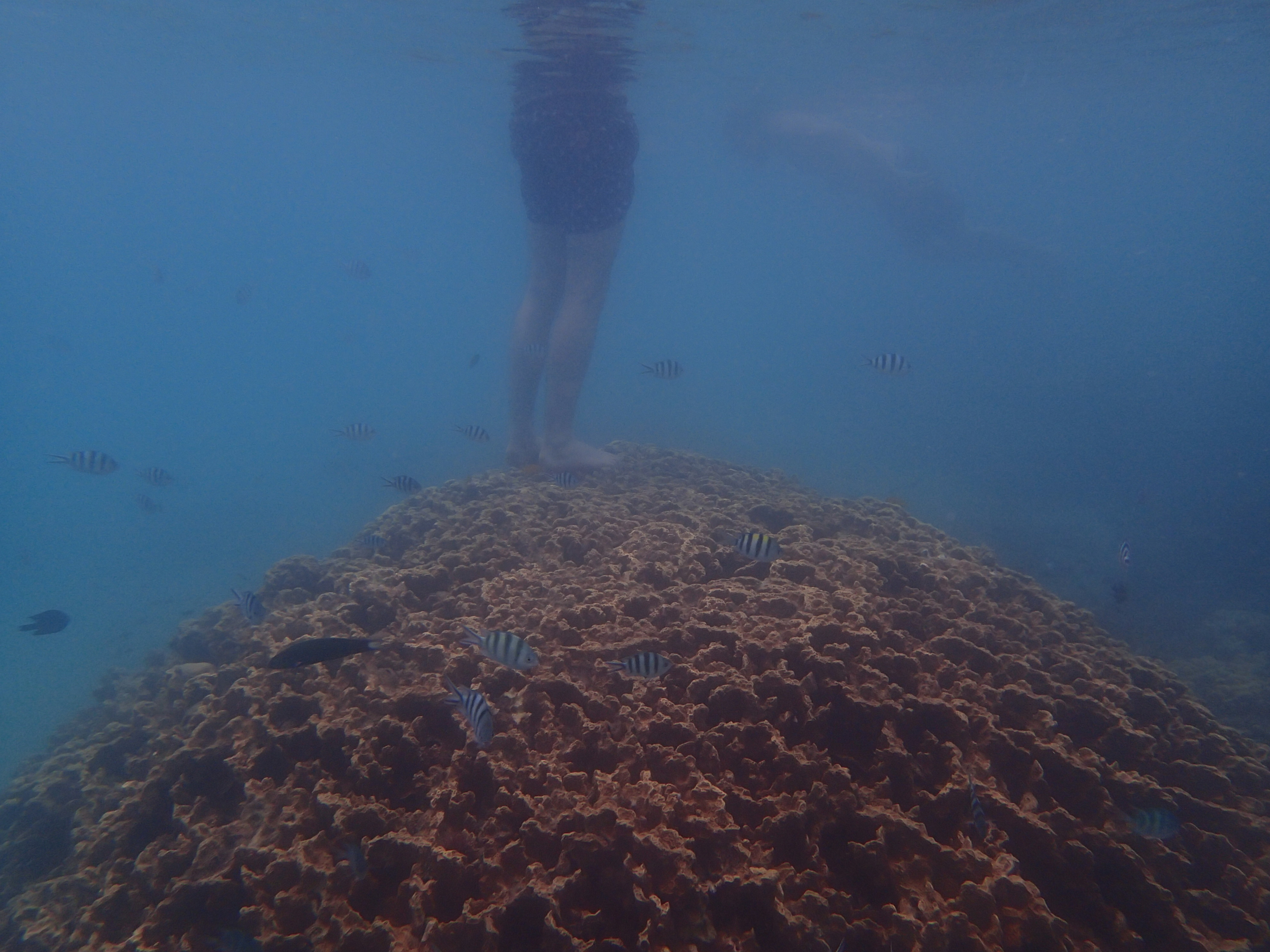 Stepping on coral